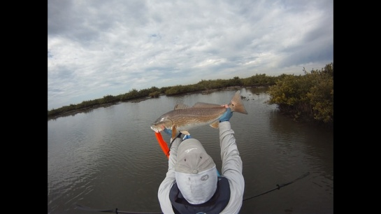 Redfish9